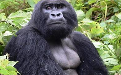 Gorilla Trekking about Filming