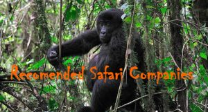 Congo Safari Companies