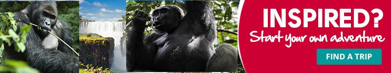 Congo Gorilla Trip 2017 & 2018