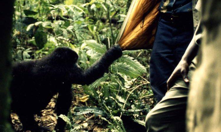 People & Gorillas in Kahuzi Biega National Park