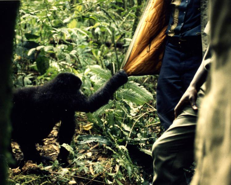 People & Gorillas in Kahuzi Biega National Park