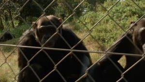 Chimpanzee Tracking in Lwiro