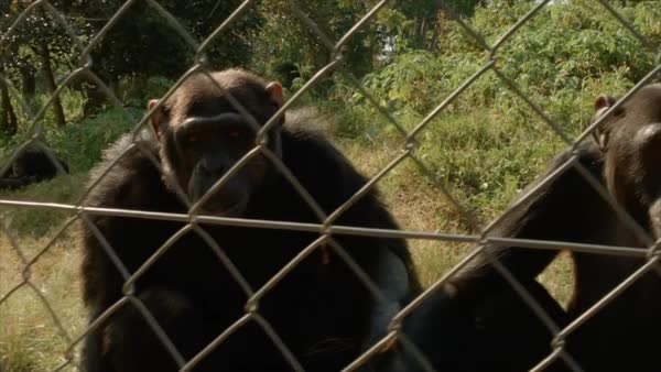 Chimpanzee Tracking in Lwiro